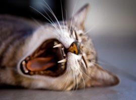 ネコが登場する絵本